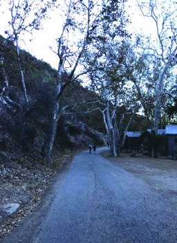 The road that leads to the cabins in El Capitan. Credit: Emma Limor '21 / SPECTRUM